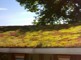 A living roof, creating habitats, soaking up rainwater, and insulating the building at Bristol Zoo